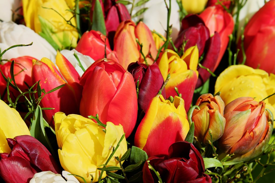 Why flowers are the best gift for mothers day lifestyle mirror this mothers day you may have trouble deciding whether chocolate flowers or any number of other beautiful gifts is the right pick for the mother in your izmirmasajfo